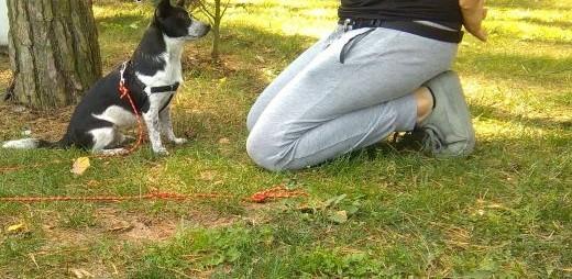 Szkolenie psów   małopolskie Myślenice