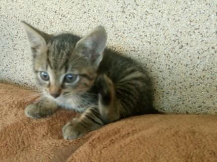 Maleńkie koteczki o adopcji!
