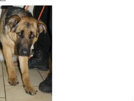 Błaszki - znalezione-zagubione psy