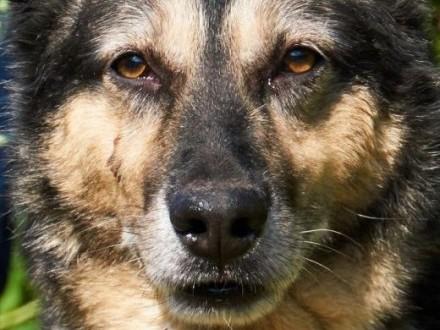 pies-Nuśka   śląskie Częstochowa