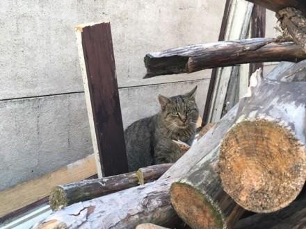 Franio  łagodny kociak szuka domu!