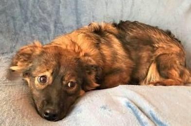MISIA – roczna szczeniaczka wyrzucona na śmietnik; szuka domu