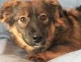 'MISIA – roczna szczeniaczka wyrzucona na śmietnik; szuka domu