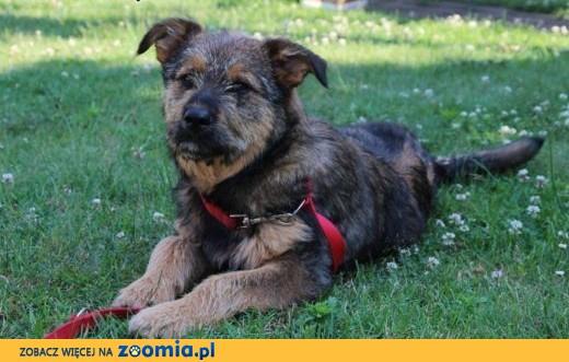 6-cio miesięczny Ares poleca się do adopcji!,  Kundelki cała Polska