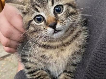 3 samodzielne kociaki lubiące psy | Komorów | Pruszków | Warszawa