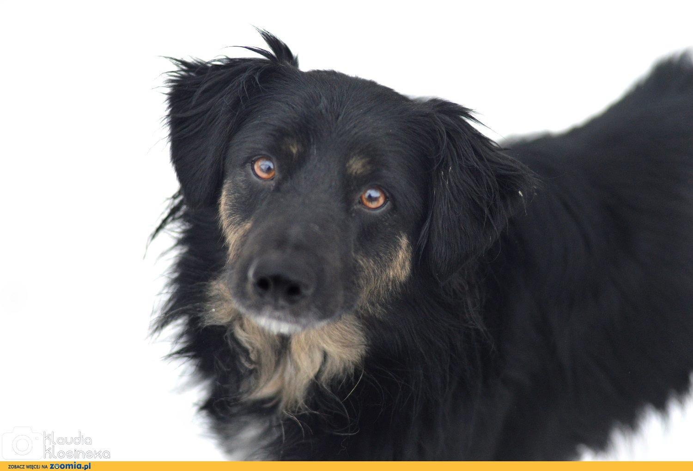 Przepiękny i niekonfliktowy, Zygi, psi IDEAŁ do pokochania!
