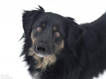 Przepiękny i niekonfliktowy  Zygi  psi IDEAŁ do pokochania!