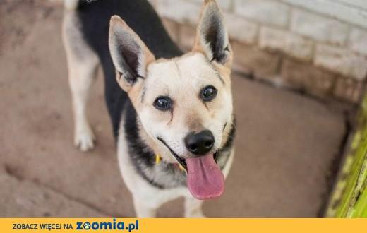 Chudy - średni, kilkuletni psiak,  łódzkie Łódź