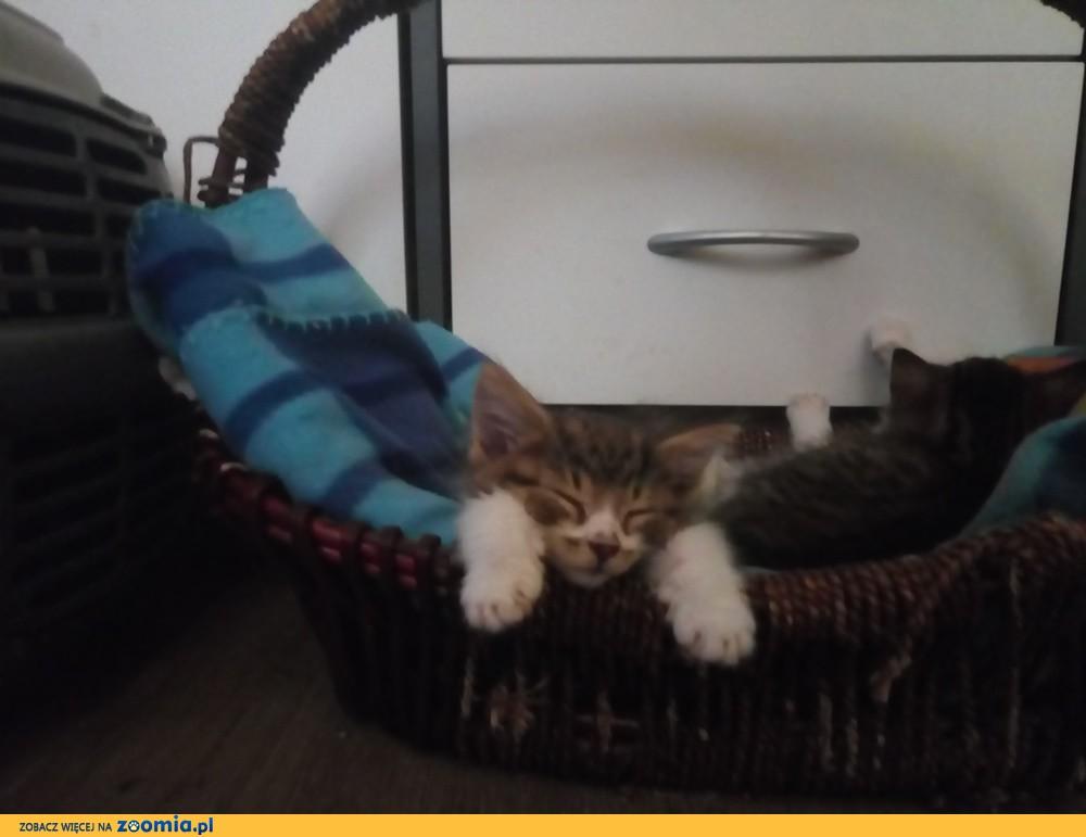Mała kotka Pusia szuka domu