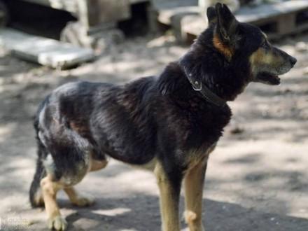Patros  kochany pies szuka wspaniałego domu  na jaki zasłużył