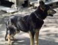 Patros, kochany pies szuka wspaniałego domu, na jaki zasłużył