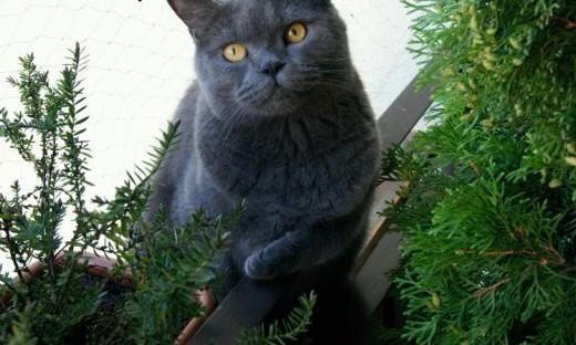 Przepiękny Leoś  łagodny  wrażliwy kocurek szuka domu!   Koty pospolite cała Polska