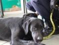 Labek - piękny, młody, energiczny pies do adopcji