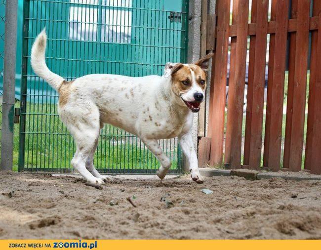 Pekan, wyjątkowy pies szuka wspaniałego domu!