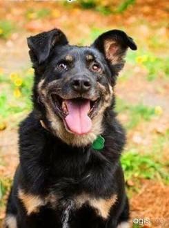 ALIK - cudowny  łagodny psiak który kocha dzieci do adopcji   mazowieckie Warszawa