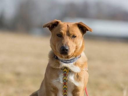 Rudzik  nieduży  psiolubny psiak szuka odpowiedzialnego domu!
