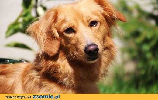 Alf - młody, greczny i kochany,  mazowieckie Nowy Dwór Mazowiecki