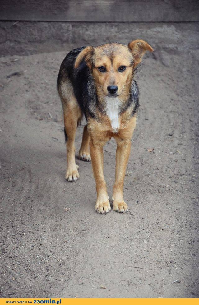 Lola, 8 miesięczna, niewielka sunia szuka domu!