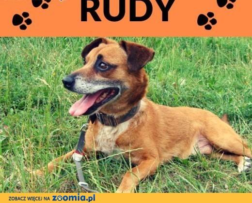 Rudy  - czy znajdzie się ktoś kto da mu szczęście?,  dolnośląskie Wrocław