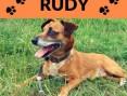'Rudy  - czy znajdzie się ktoś kto da mu szczęście?,  dolnośląskie Wrocław