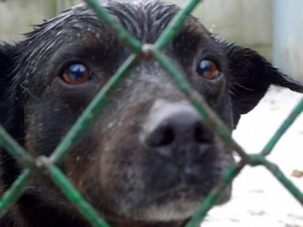 Pascal-smutny  zrezygnowany psiak za kratami czeka na nowy dom