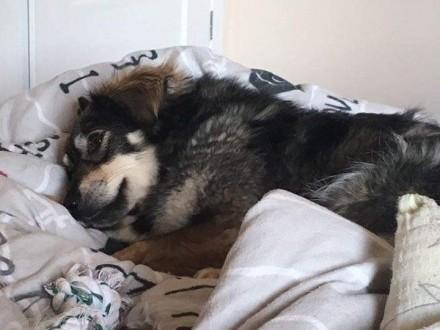 MIMI - urocze psie serduszko - podzielisz się z nią poduszką?   mazowieckie Warszawa