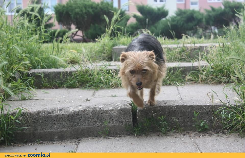 Przygarnij Psa