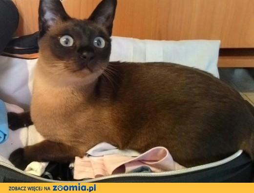 zaginela kotka Ami,  śląskie Zabrze