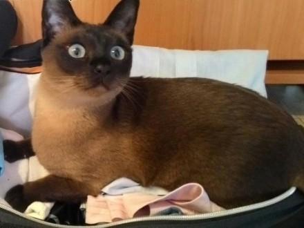 zaginela kotka Ami   śląskie Zabrze