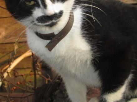 Zaginął kot na ulicy Krakowskiej(Częstochowa)