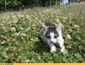 8 tygodniowe kocięta szukają kochających domów!