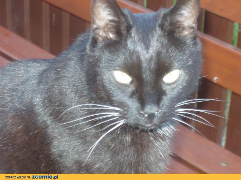 Zaginął czarny kot- W Ruścu pod Nadarzynem w okolicy ulicy Agrestowej