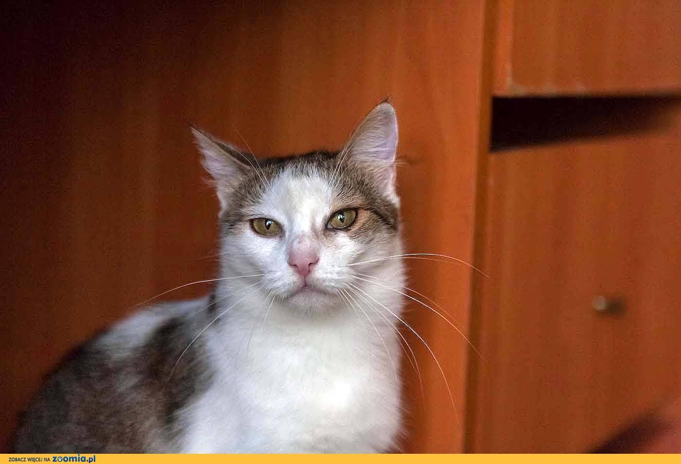 Gabi, spokojna, domowa koteczka z charakterkiem szuka kochającego domu!