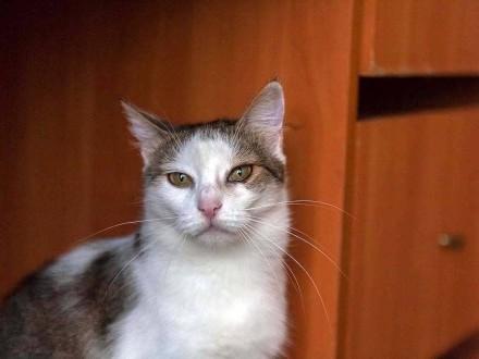 Gabi  spokojna  domowa koteczka z charakterkiem szuka kochającego domu!