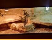 Okazja terrarium dla agamy gekona żółwia węża kameleona