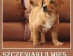 3mies.szczeniaki BIGLINKI,średnie,piesek,suczka.ADOPCJA,  śląskie Katowice