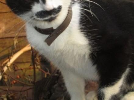 Zaginął kot na ulicy Krakowskiej()   śląskie Częstochowa