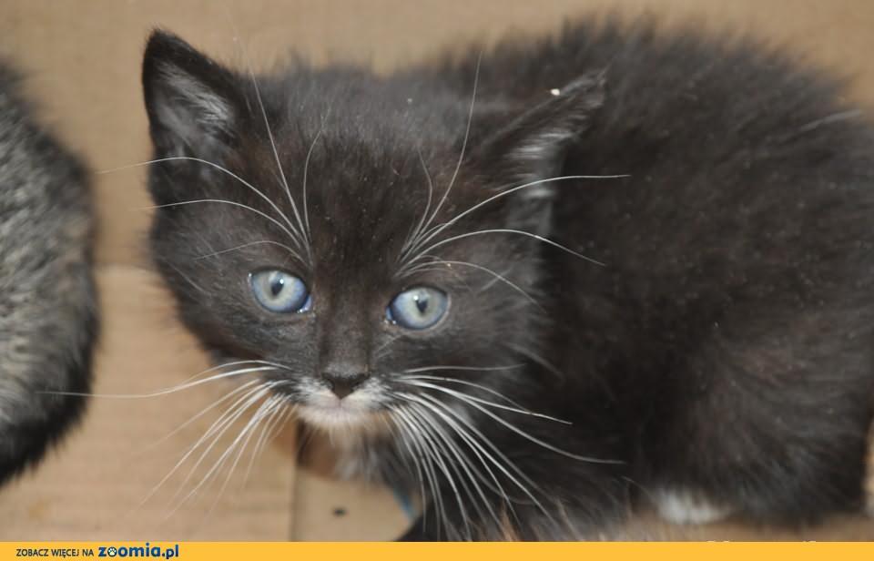 Śliczne, kolorowe, maleńkie kocięta czekają na nowe domy!