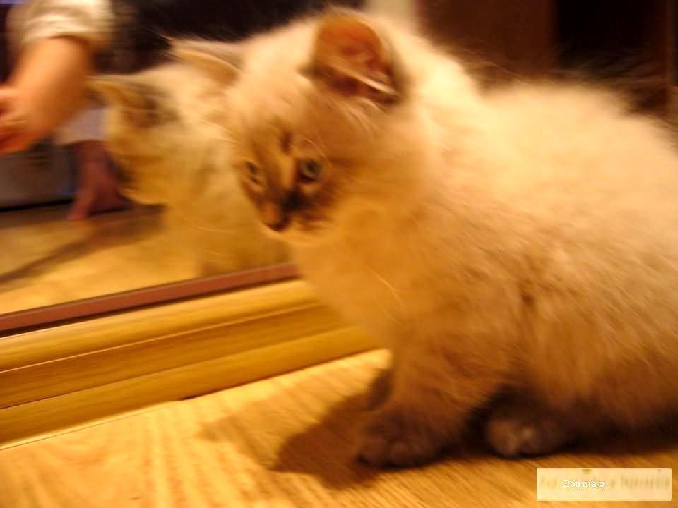 Piękne kociaczki