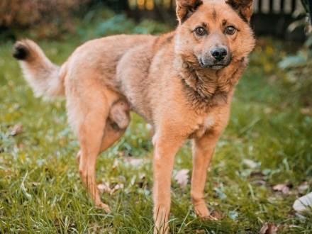 RUDZIK - kochany  spragniony miłości psiak  szuka domu!