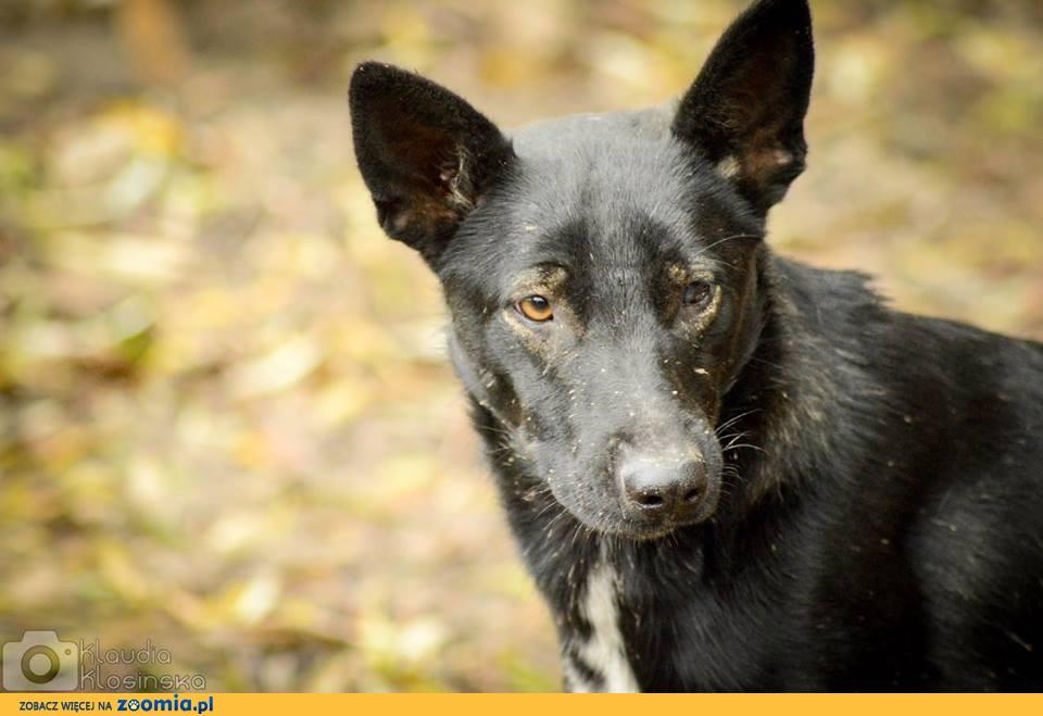Marko, młody, przyjazny pies szuka domu na zawsze!