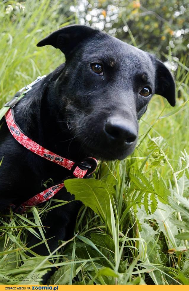 Bambo, młody, przyjazny psiak, grzeczny szuka domu!