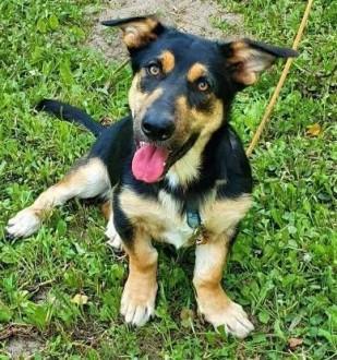DRAGON - młodziutki psiak  który kocha psy  dzieci  koty do adopcji   mazowieckie Warszawa