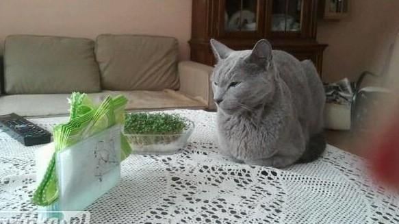 Uwaga Zgierz oś 650 lecia zaginał kot rosyjski niebieski nagroda