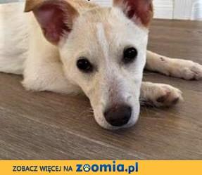 MIĘTA - 5 miesięczna sunia, ma tydzień na znalezienie domu!ADOPTUJ!,  mazowieckie Warszawa