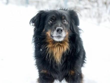 Niewielki  uroczy kudłatek Duduś  przyjazny psiak do adopcji!