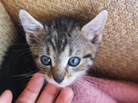 Małe kociaki szukają domów   łódzkie Łódź