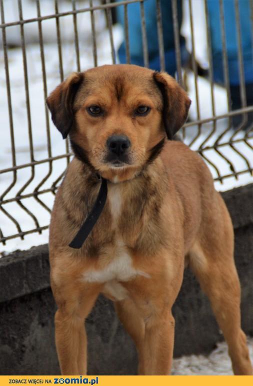 Nów - miły pies szuka domu