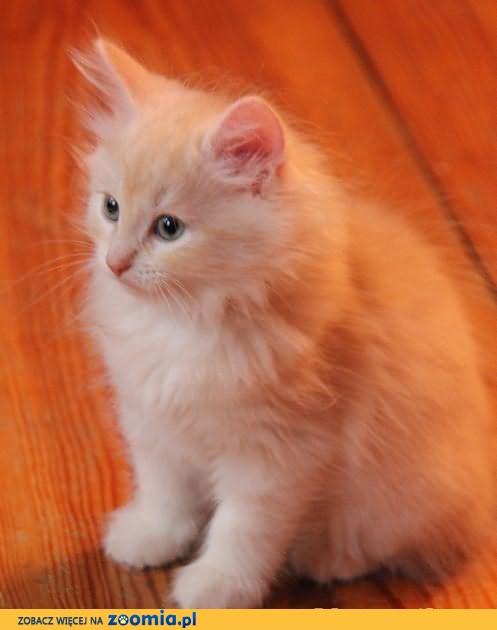 Ksenia Fordonia - urocza kotka syberyjska