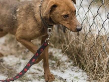 Nieduży  1 5 roczny psiaczek szuka domu   lubuskie Zielona Góra